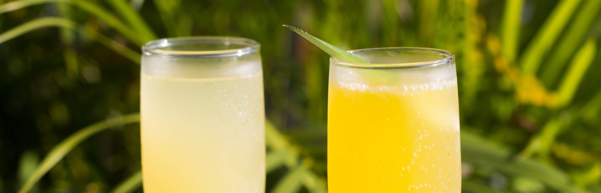 Brunch Treasure Island | Bottomless Mimosa, Outdoor Seating, Live Music